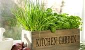 beltéri kertek