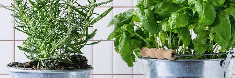 illatos fűszernövények házilag