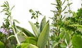 fűszer-, gyógynövény magok
