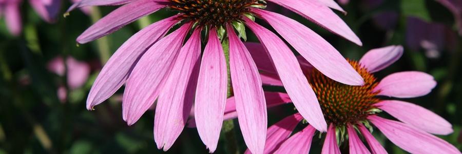 terasz közeli virágok