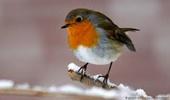 madarak, állatok