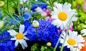 fűmag, virág magok