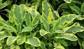 egzotikus fűszernövények