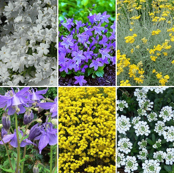 Balkon- és terasz - vegyes színű virágos évelők 6 db
