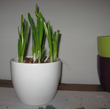 Kerámia kaspó - fehér 15 cm