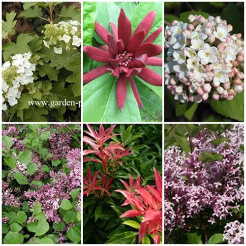 Romantikus kert - cserjék 6 db