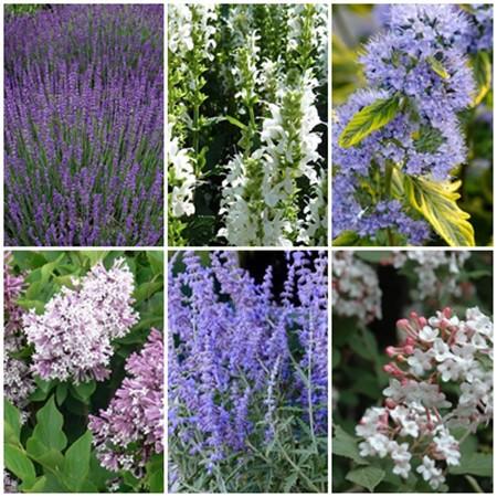 Vidéki kert - illatos cserjék1. 6 db