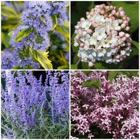 Vidéki kert - illatos cserjék1. 4 db