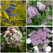 Mediterrán kert - illatos cserjék 4 db