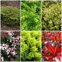 Mediterrán kert - örökzöldek2. 6 db