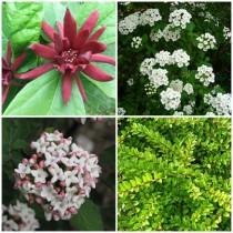 Vidéki kert - örökzöldek2. 4 db