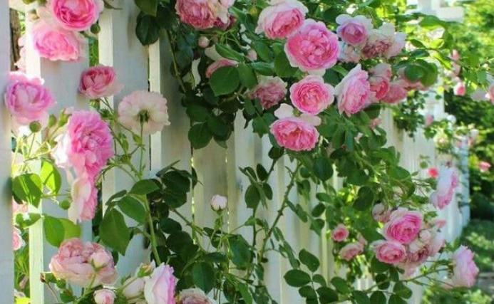 illatos virágözön romantikus rózsákkal