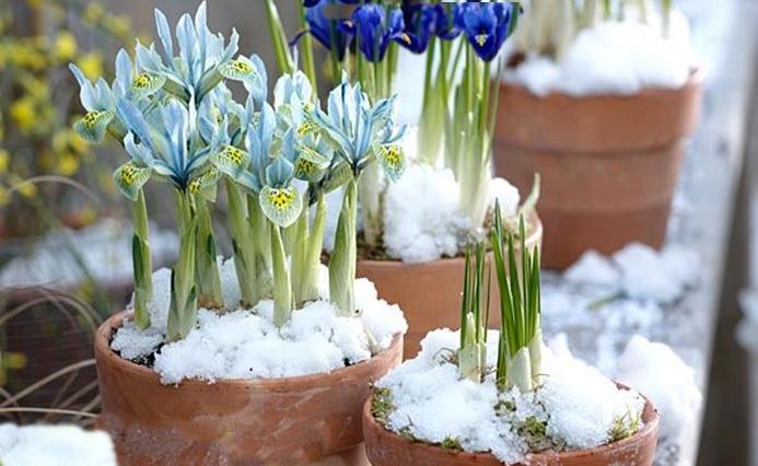 fagyálló cserepek a téli napokra