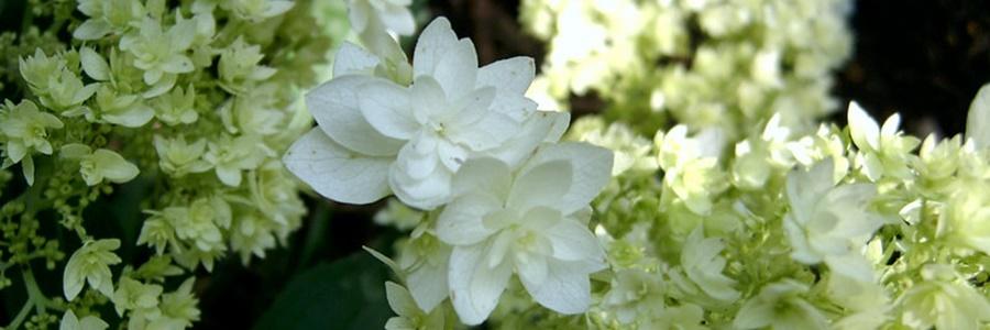 szépséghibás növények NAGYON OLCSÓN