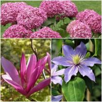 Modern rózsaszín kerti csokor-hortenzia-liliomfa-klematisz
