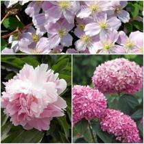 Rózsaszín csokor hortenzia-klematisz -bazsarózsa